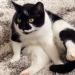 A New York la gatta Muji ha vissuto 11 giorni nel soffitto dell'aereoporto